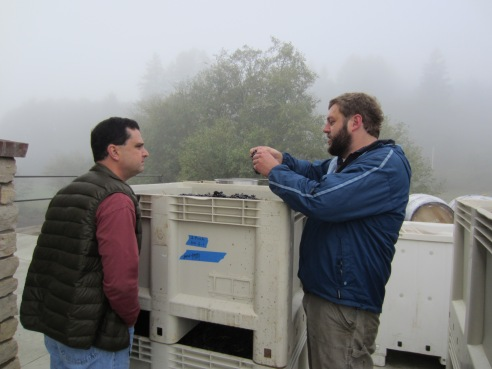 Dave and Drew inspect the clusters of Syrah from eastern Oregon.