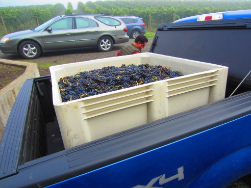 Bluebell, loaded up and ready to transport syrah bin #1 to our processing facility, ADEA Winery.
