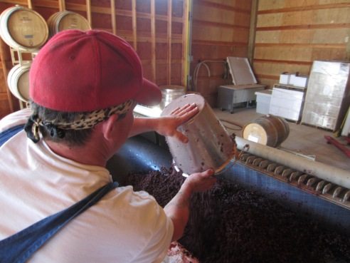 Jake starts transferring grape skins from the fermenter to the press.