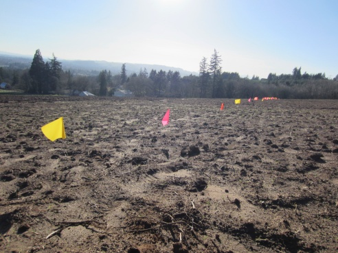 …apparently Jory Soil is an ideal growing condition for yellow, pink and orange row marker flags.