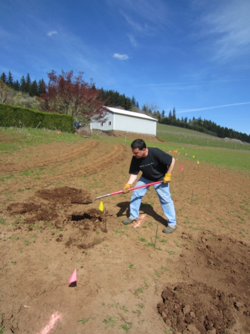 Dave backfills the holes used to locate our septic drain field.