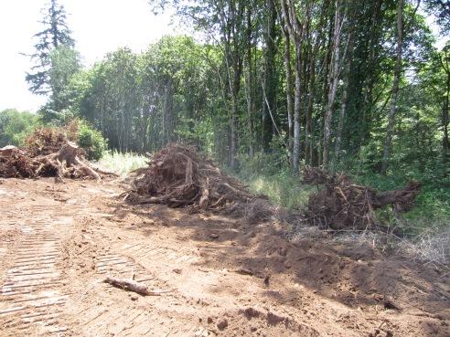 Buh-bye stumps!