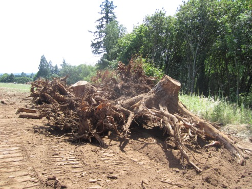 There were a LOT of stumps left behind. No longer!
